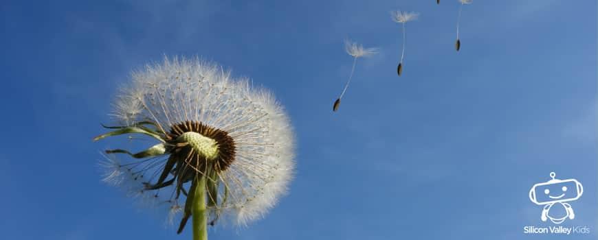 Wind Erklärung für die Grundschule