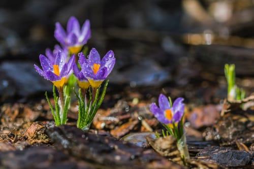 Frühling in der Grundschule - Die Frühlingsanzeiger