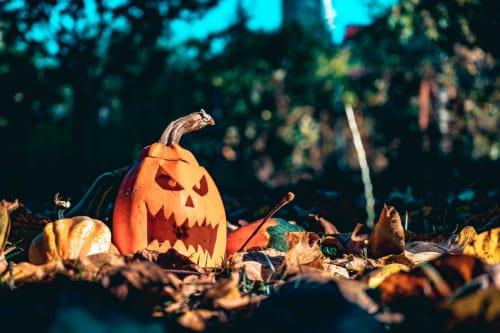 Herbst in der Grundschule. Das Kürbisschnitzen