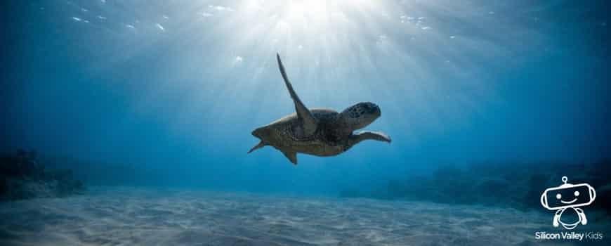 Ozean für Kinder: Eine Erklärung