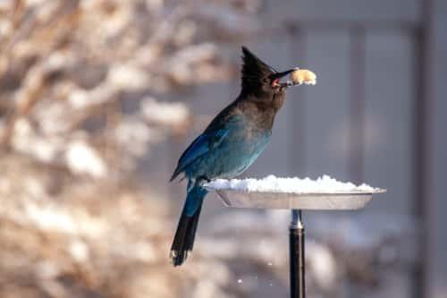 Winter Grundschule: Die Vogelfütterung