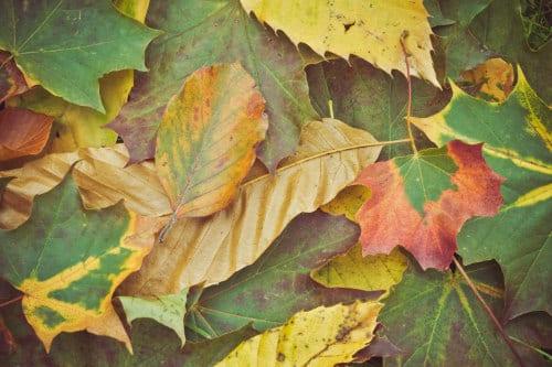 Herbst für Kinder - buntes Laub