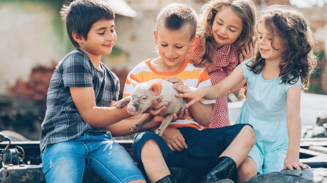 Kindergeburtstag Bauernhof - Tierwelt entdecken
