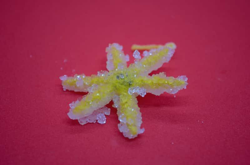 Salzkristalle züchten: Das Ergebnis